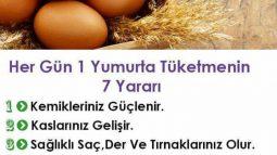 Her Gün 1 Yumurta Tüketmenin 7 Yararı
