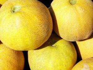 Kavun - Melon