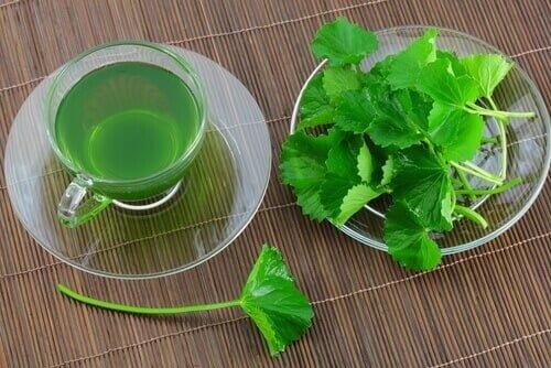 maydanoz çayı