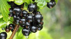 Oksijen içeren besinler