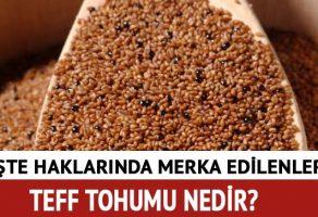 Teff tohumu nedir? Teff tohumu nasıl tüketilir?