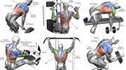 Sırt, insan anatomisinin en önemli parçası