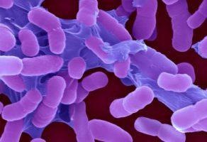 Dünya Sağlık Örgütü: Acilen yeni antibiyotikler gerekiyor