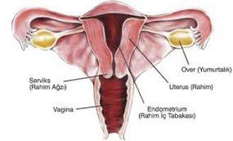 Kadın Üreme Organı Hastalıkları Ve Tedavisi