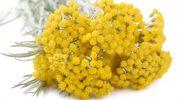 Altın Otu (Ölmez çiçek): Detoks Etkileri Vardır