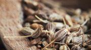 Anason tohumu: Depresyon Tedavisinde Yardımcı Olabilir