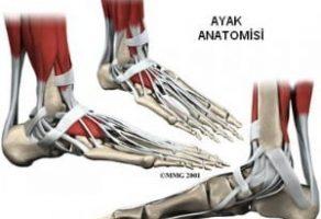 Ayak Bileği Kemikleri