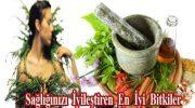 Sağlığınızı İyileştiren En İyi  Bitkiler
