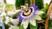 Kalp çarpıntısına iyi gelen bitkiler- besinler