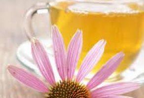 Ekinezya Çayının Faydası ve Yan Etkileri