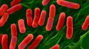 Helikobakteri Nedir Nasıl Bulaşır Tedavisi