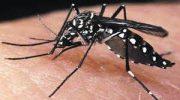 Yolcular İçin Chikungunya Hastalığı Riski ve Korunma Önerileri