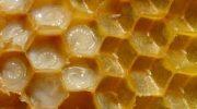 Arısütü ve faydaları