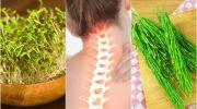 Kemik Sağlığınızı İyileştirecek 7 Tıbbi Bitki