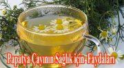Papatya Çayının Sağlık için  Faydaları