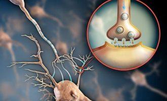 Nörotransmitter Nedir? Nörotransmitterlerin Sağlığa Etkileri