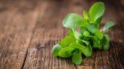 Stevia nedir, neye iyi gelir?