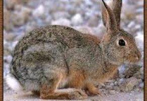 Tavşan Etinin Faydaları