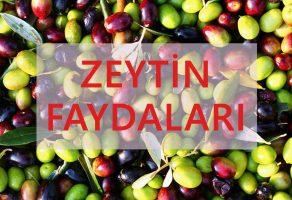 Zeytinin Faydaları, Kalorisi ve Besin Değeri